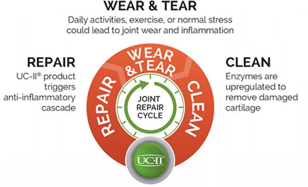 Collagene UC-II contrasta dolore<br> articolare e invecchiamento funzionale
